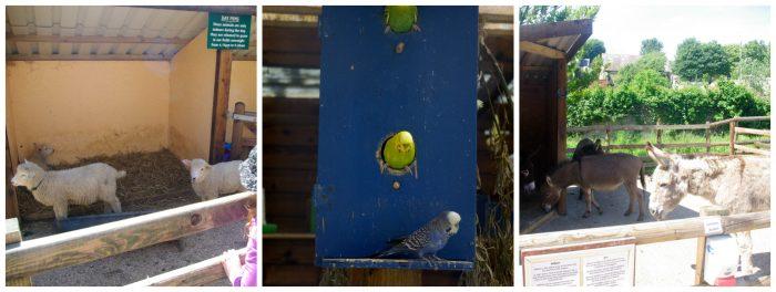 Animals at Abbotsbury Childrens Farm