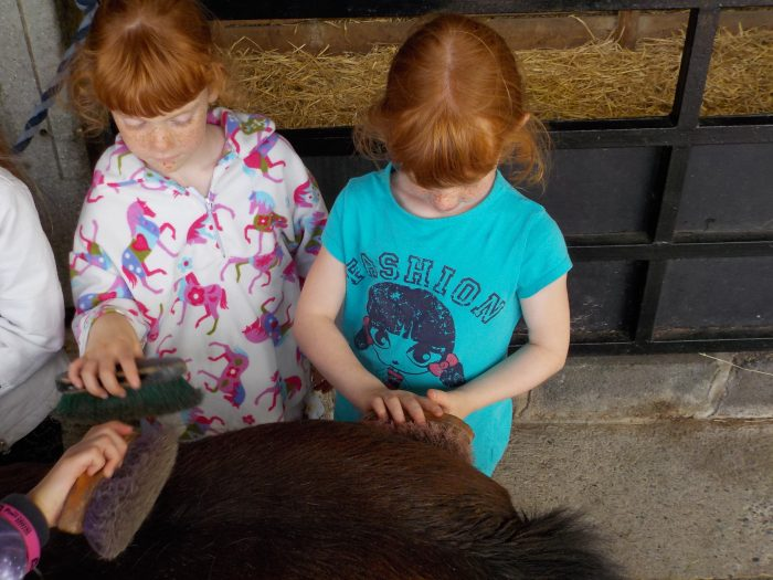 Pony grooming at the Miniature Pony Centre