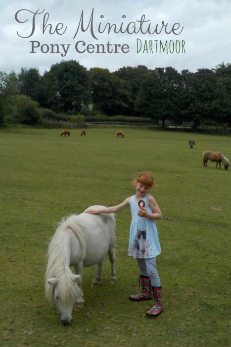 Miniature Pony Centre Devon