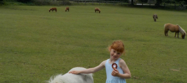 Miniature Pony Centre Devon