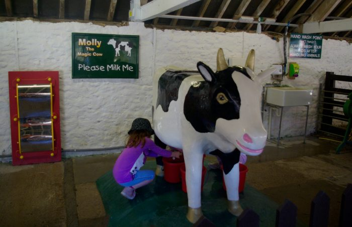 Molly the magic cow at Abbotsbury Childrens Farm