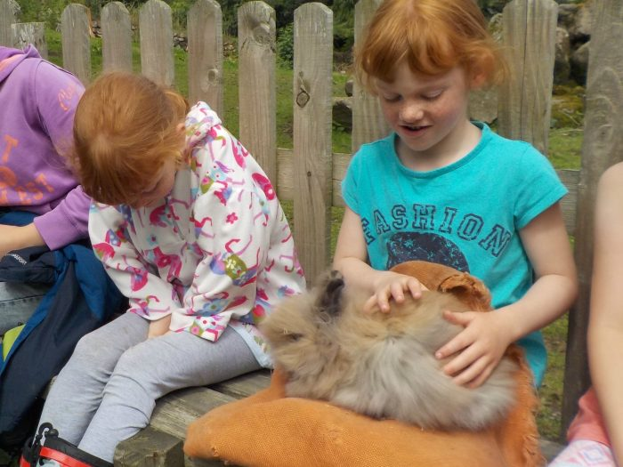 Meeting a rabbit at the Miniature Pony Centre Dartmoor