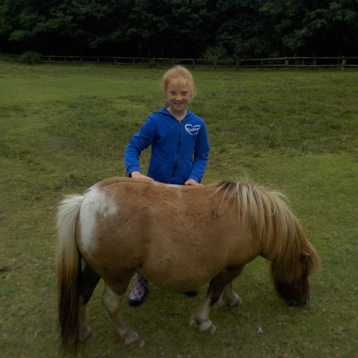 Miniature ponies at The Miniature Pony Centre