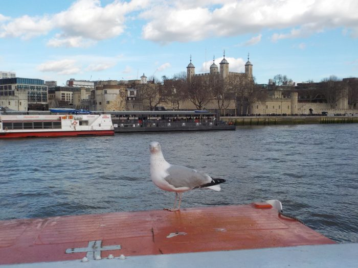 A seagull and the Tower of London from the City Cruises boat on the Thames