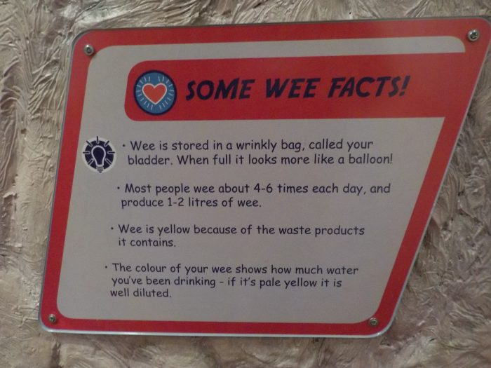 Wee facts at Thackray Medical Museum
