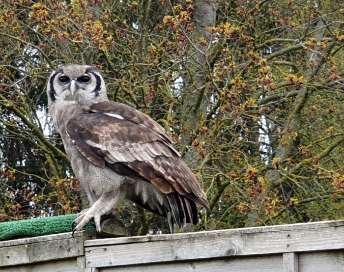 the Hawk Conservancy - Hampshire - a review by Emma of Bavarian Sojourn